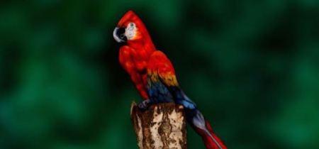 200314_parrot
