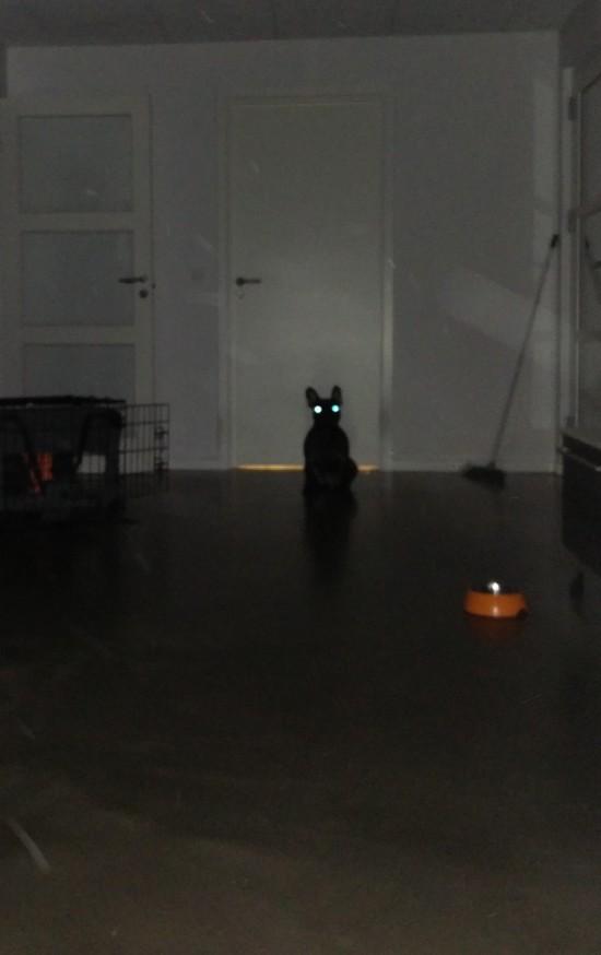 Jeg kunne have svoret, at Stitch sad og kiggede på Overkommandoens dør til badeværelset; men da jeg tog billedet...