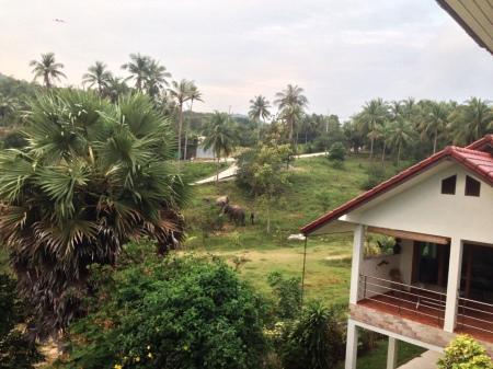 Elefanter i baghaven en tidlig morgen