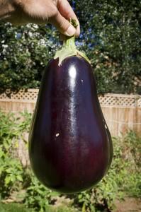 200413_aubergine