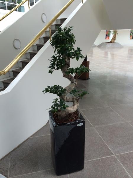 Pænt bonsai-agtigt træ på pinden